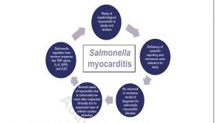 Video Abstract: Salmonella Myocarditis