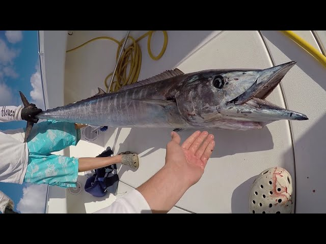 WAHOO CATCH AND COOK!! Fastest Strongest Fish In The Ocean!!