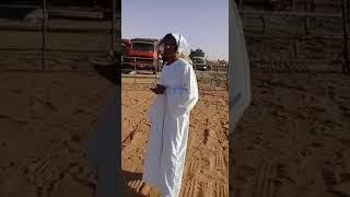 الشاعر/محمد حسين الكباشي