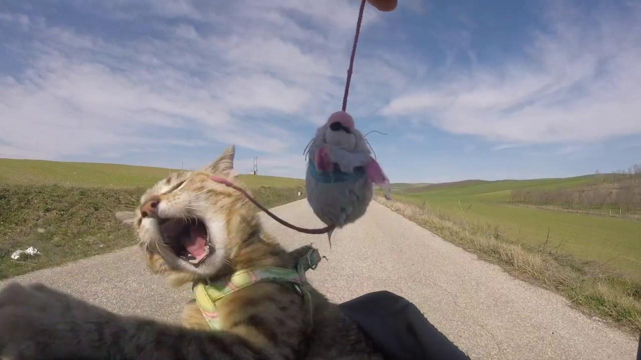 Кот катается с хозяином на велосипеде фото
