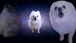 Shooting Stars Gabe The Dog