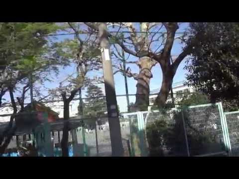 東京桜散歩 杉並区立沓掛小学校 今日が入学式 2014.4.5 Kutukake Suginami
