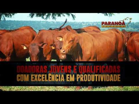 Leilão Genética Paranoá Senepol e Convidados 2017 – Vídeo