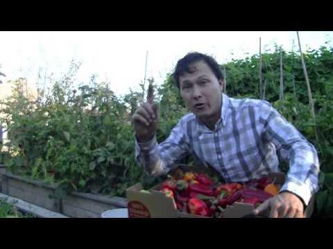 Bon marché le traitement du microorganisme végétal des ongles