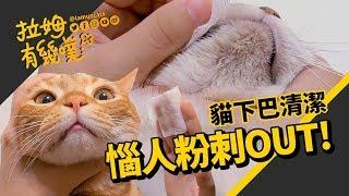 How to clean feline acne|LAMUNCATS ♤