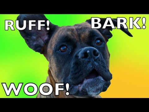 Brock The Boxer Dog: DIFFERENT BARKS = DIFFERENT MEANINGS!