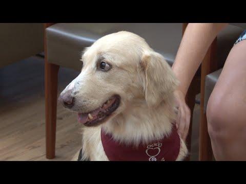 Hospital recebe a visita de animais 'terapeutas'