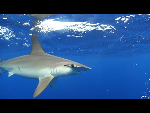 Sea of Cortez – Baja California Sur, Mexico – Diving with Hammerhead Sharks, Sea lions, Whale Sharks