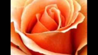 A1 Like A Rose HQ