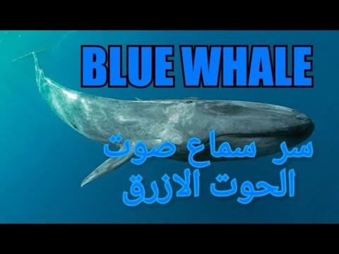 بزنس ميدل إيست هل صوت الحوت الأزرق من علامات الساعة قصة ظهوره في مصر وجدة