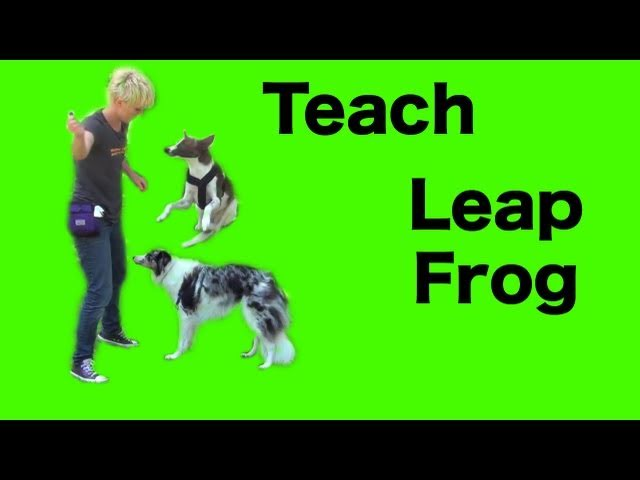 Dog tricks tutorial: leap frog