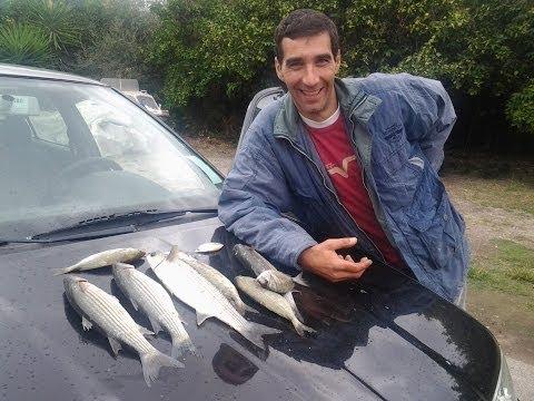 Video che pesca su una carpa nella regione DOmsk