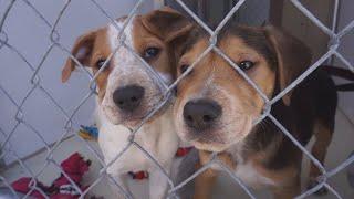 Veterans Get Comfort in Hugging Orphaned Puppies