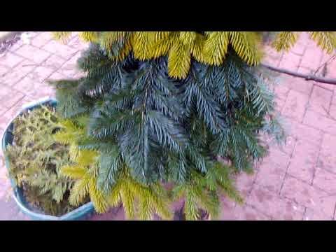 🎄Zipfel Tannenbaum  aus Zweigen selber machen