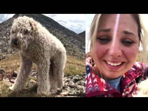 Owner Reunites With Her Dog After Goldendoodle Was Lost In Rocky Mountains