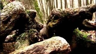 Video Čekání na medvěda
