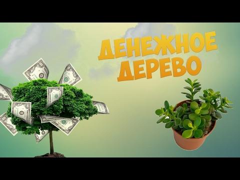 Минск услуги астролога