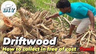 How To Collect Driftwood In Free Of Cost