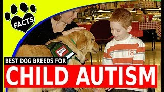 Service Dogs: Top 5 Service Dog Breeds for Children with Autism Spectrum Disorder - Animal Facts