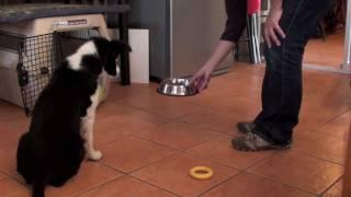 Puppy training: Impulse control exercises