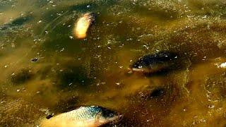 Рыбалка по первому льду куда поехать