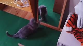 Смешные проделки прикольных котов