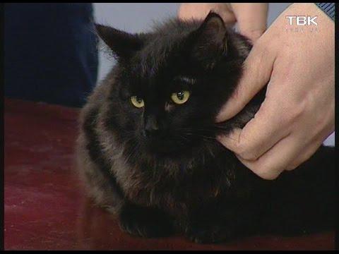 Советы ветеринара: кожные болезни у кошек и их диагностика