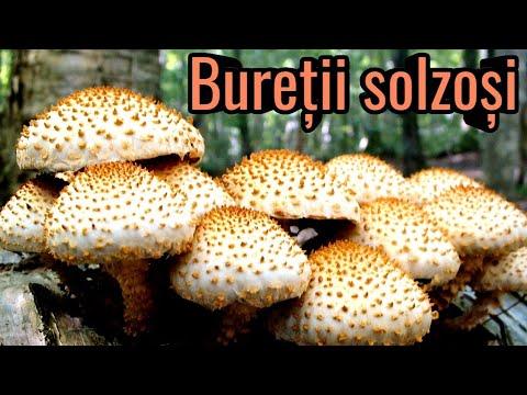 ciuperci parazitare obligatorii