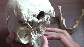 INTRODUCTION OF SKULL
