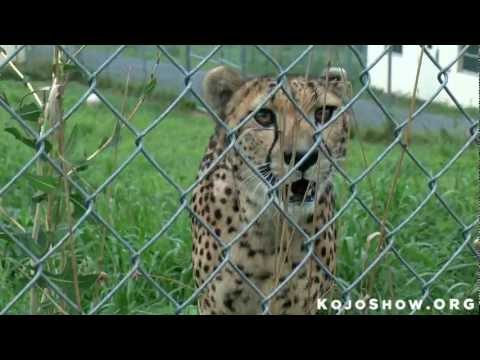 Endangered: Animals And Zoos Fighting For Survival