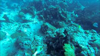preview picture of video 'Diving Fiji's Rainbow Reef with Dolphin Bay Divers'