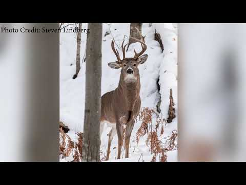 Former Michigan Lawmaker Spots a Buck with Three Antlers