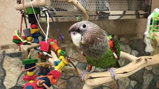 Parrot Definitions - What is a Parrot?