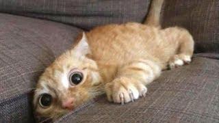 Gatos Chistosos - Perros Chistosos - Videos Graciosos #1