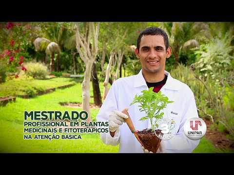 Pesquisas em plantas medicinais e aromáticas