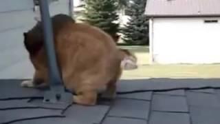 Прикол кошка і білка