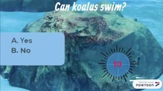 Koala fun quiz!