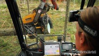 Metsiä hakataan Suomessa liikaa