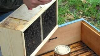 Releasing Package Bees In The Rain