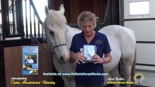 Introduction to Holistic Horseworks April Battles