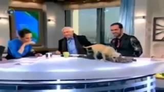 видео приколы с животными