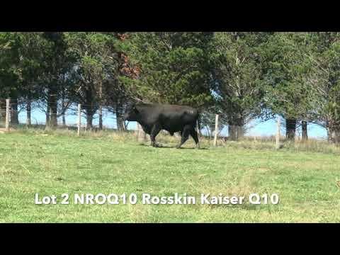 ROSSKIN KAISER Q10