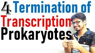 Transcription termination in prokaryotes | Prokaryotic transcription lecture 4