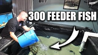 FEEDING THE PREDATOR FISH POND