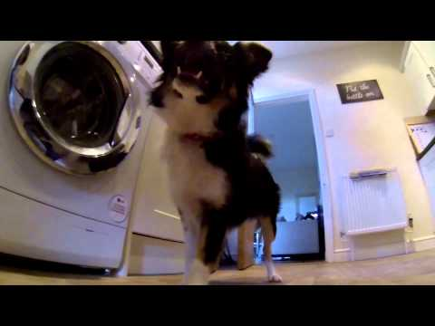 Border collie catching his ball in slow motion 120fps gopro hero 3