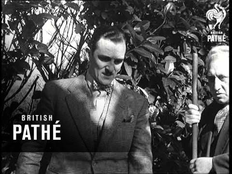 Houdini II Buried Alive (1949) (видео)