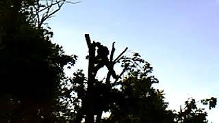 """Удаление деревьев Киев 0980877778 от компании КиевБудмаркет"""" - видео"""