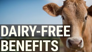 The 7 Best Benefits of Going Dairy Free - Better Health, Better You