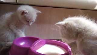 Смешные Котята.MOV