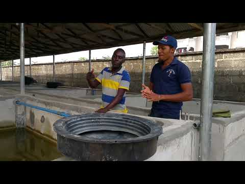 , title : 'THIS WILL INSPIRE YOU TO STARTING UP OR REOPENING YOUR FISH FARM; HUGE INVESTMENT, HUGE TURNOVER.